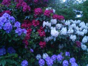 090602 Full blom